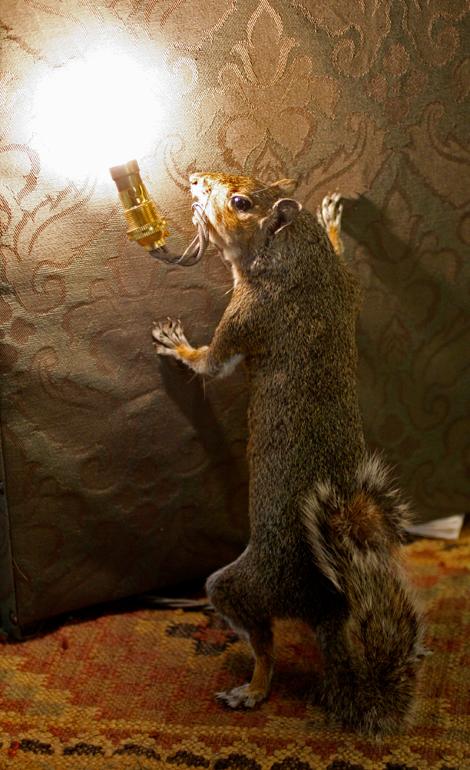Ldf_squirrel